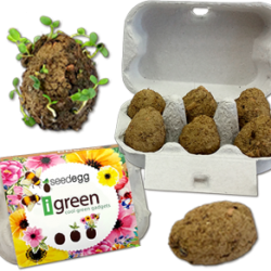 Seedegg-plantable seed bombs